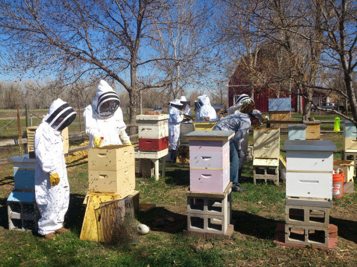 Bee Keeping Residents e